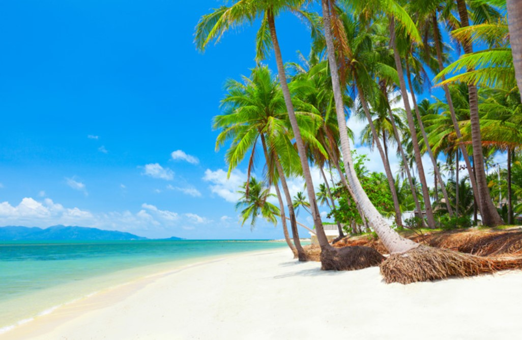 Thailand pristine beach and palm trees