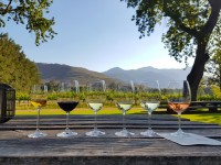 Vineyard wine tasting in South Africa. shutterstock 1794809665