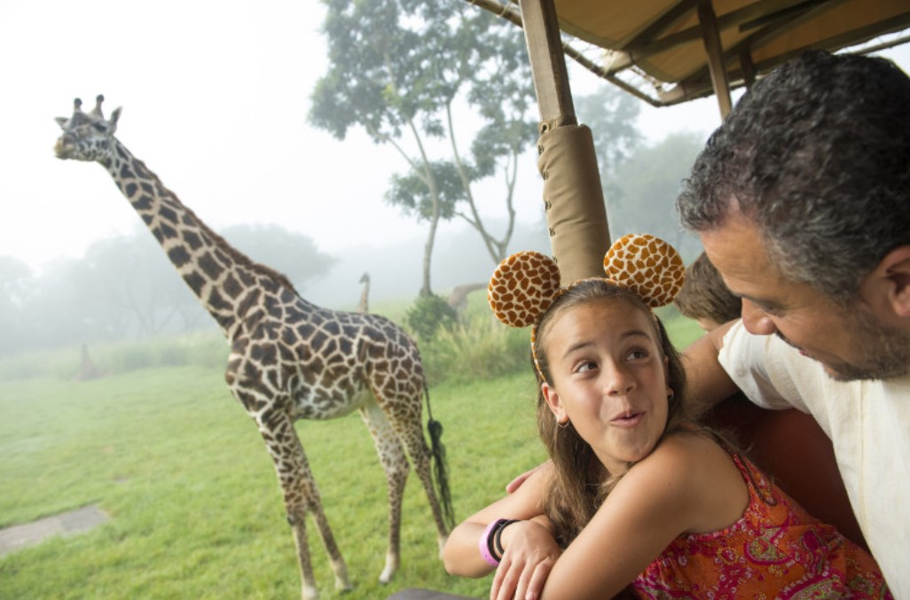 Disney's Animal Kingdom Theme Park - A girl spots a giraffe on tour
